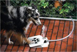 dispozitiv de apa pentru caini