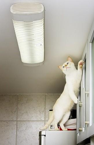 pisica si musca