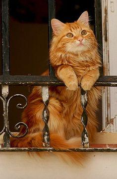 pisica la balcon