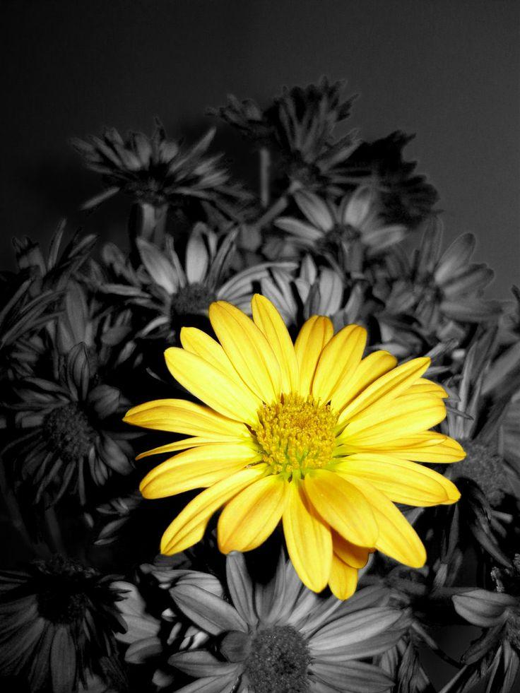 galben floare