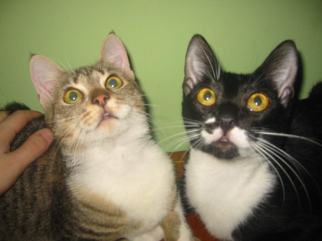 cele doua pisicute 1
