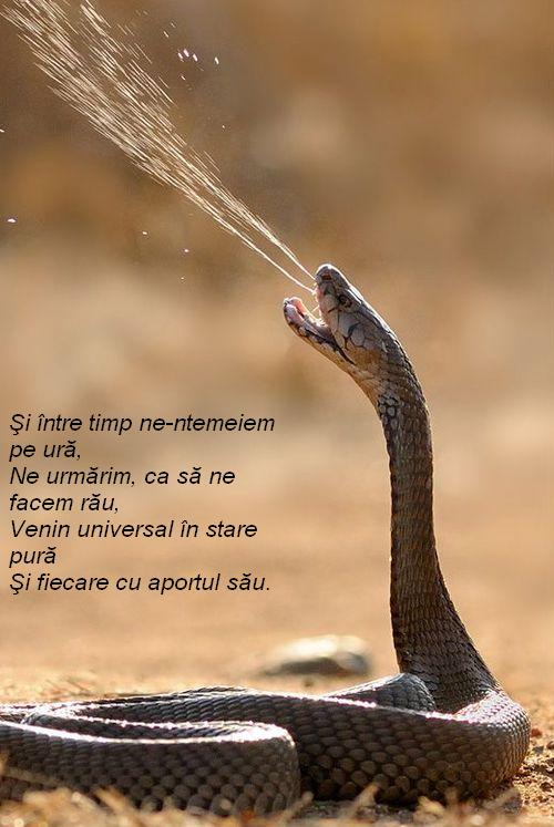venin