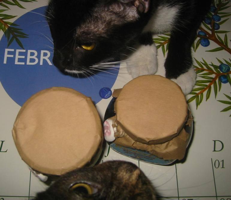 dulceata la ceaun si pisici