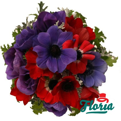 flori-buchet-de-anemone-mov-2547