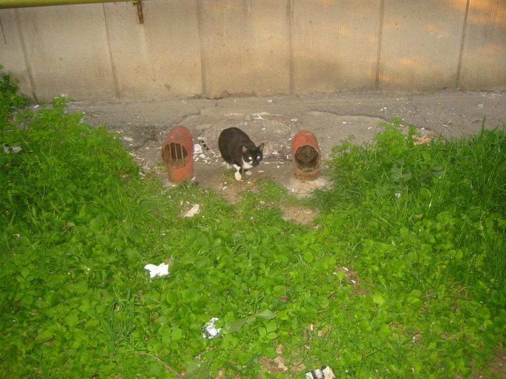 pisica-neagra-langa-bloc-1024x768