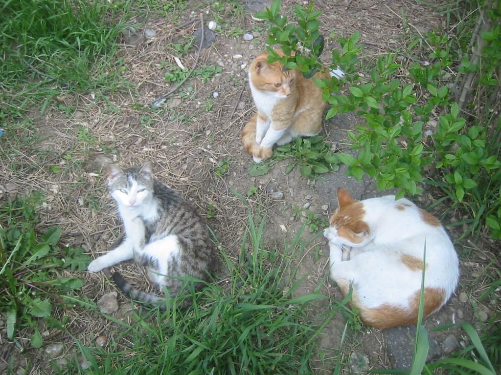 trei pisici in iarba