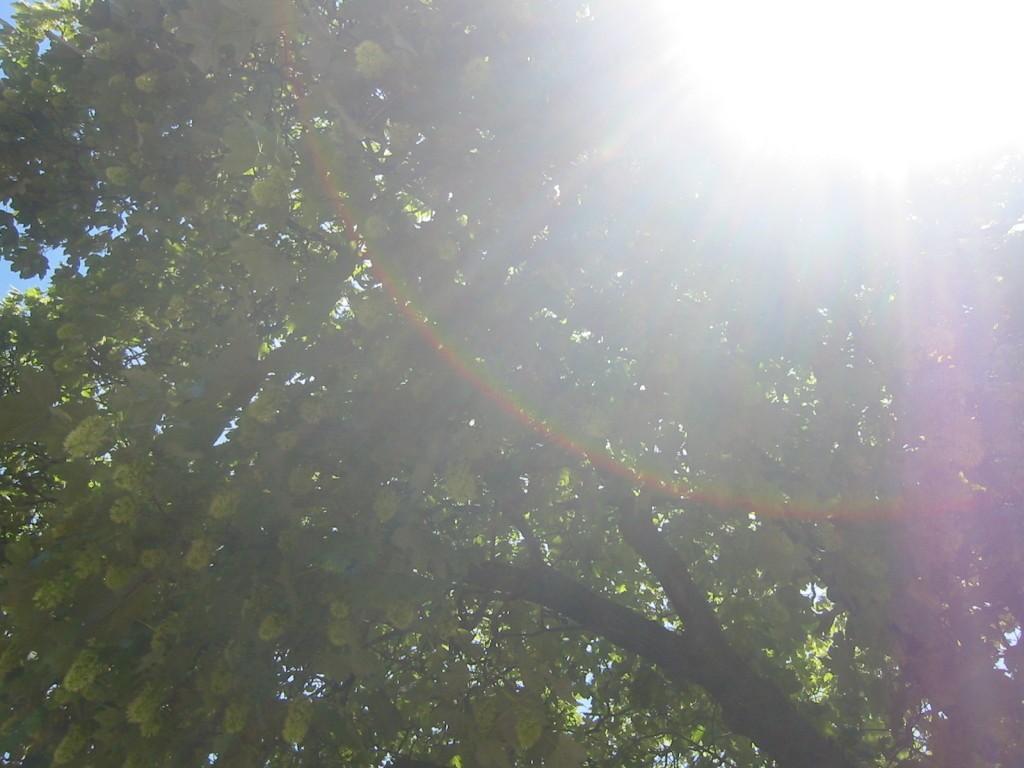 curcubeu-in copac 1024x768