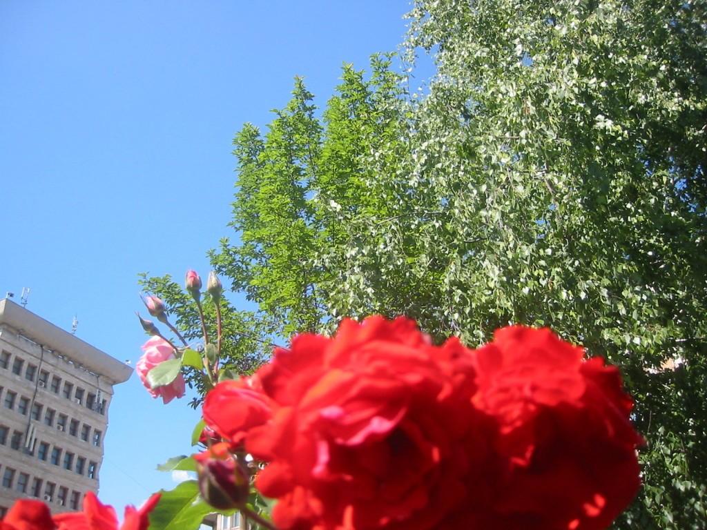 flori-centru-ploiesti-1024x768