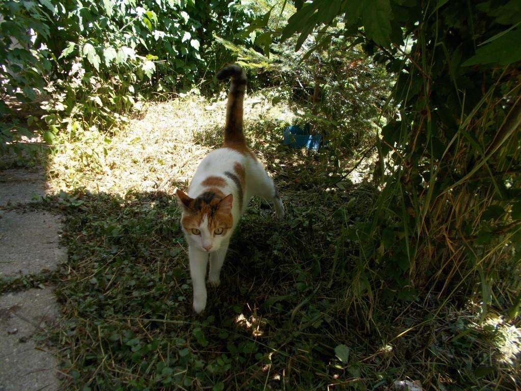 pisica-frumoasa-1024x768