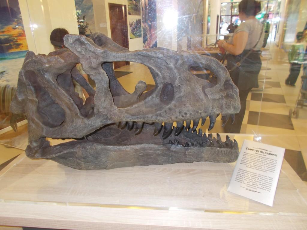 craniu-dinozaur-dino-park-rasnov-1024x768