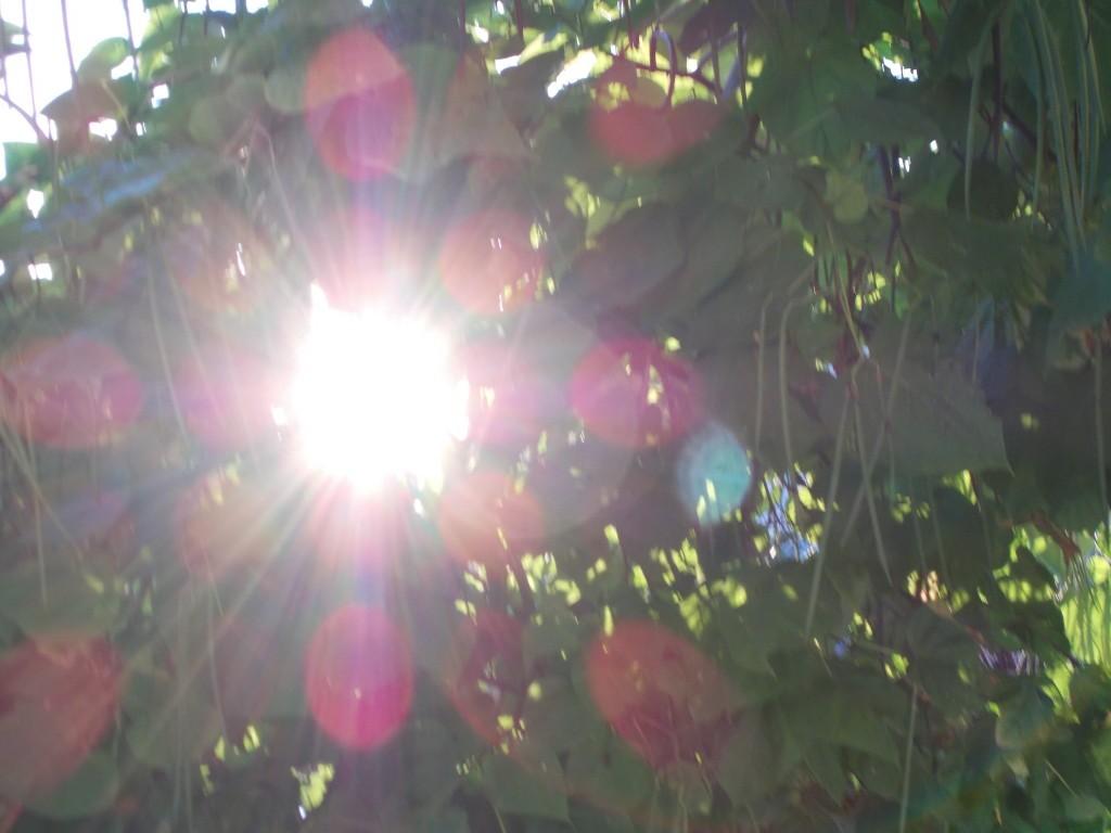 rasarit de soare frumos