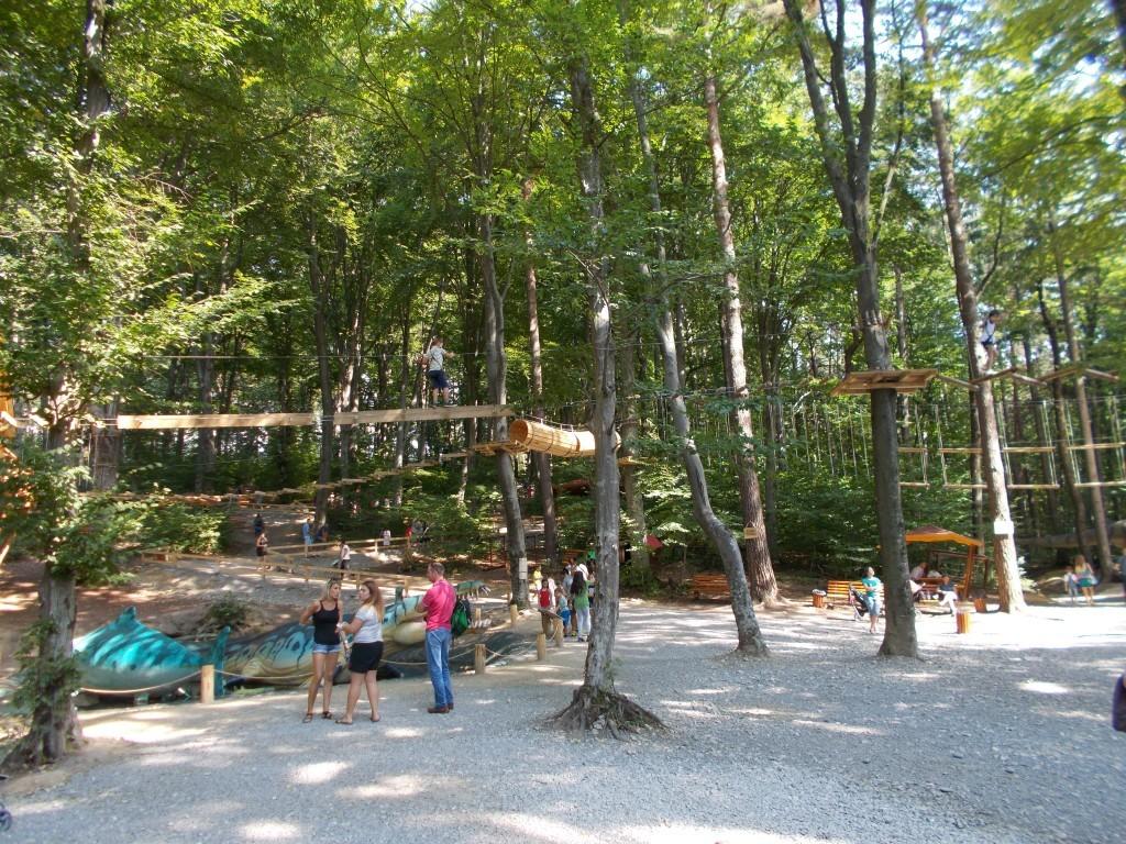 traseu-copaci-dino-park-rasnov-1024x768
