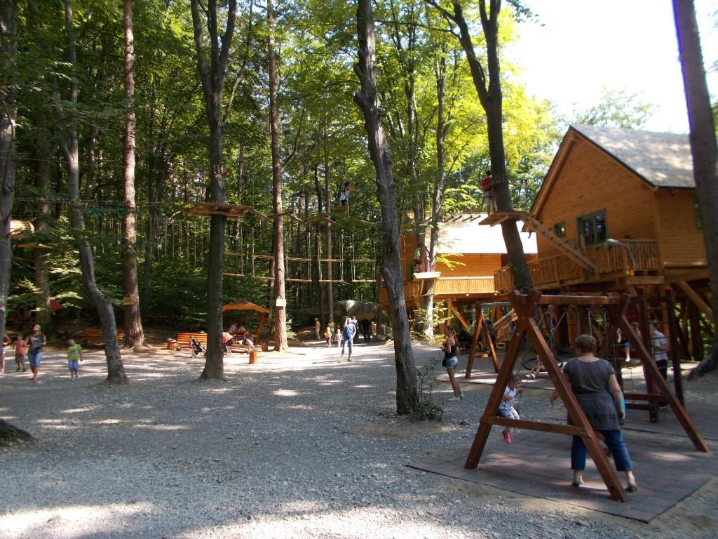 traseu-in-copaci-dino-park-rasnov-1024x768