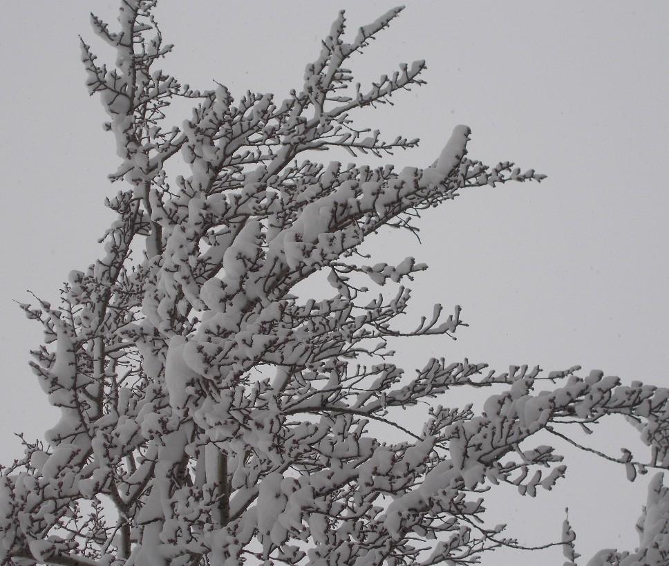 iarna in imagini frumoase 1