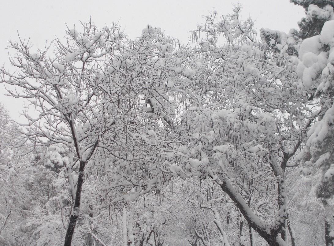 iarna in imagini frumoase 10