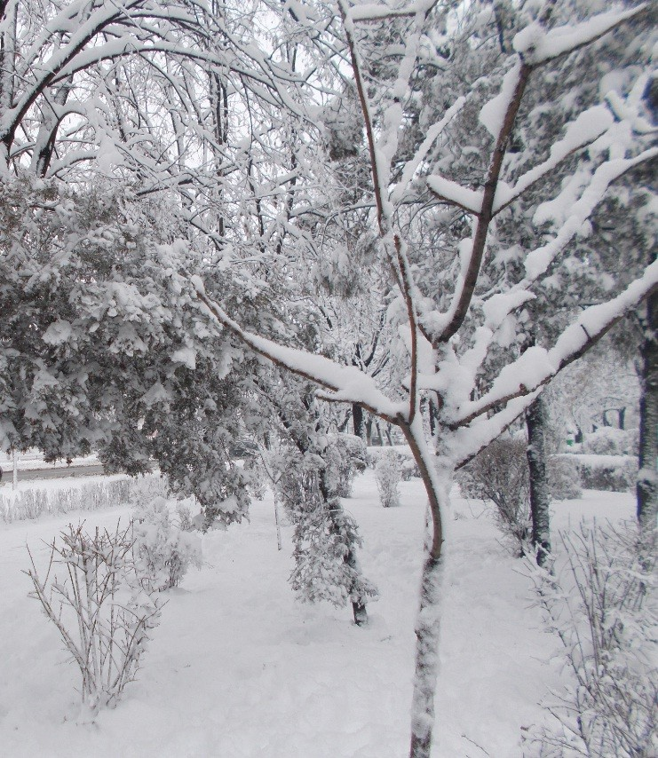 iarna in imagini frumoase 11