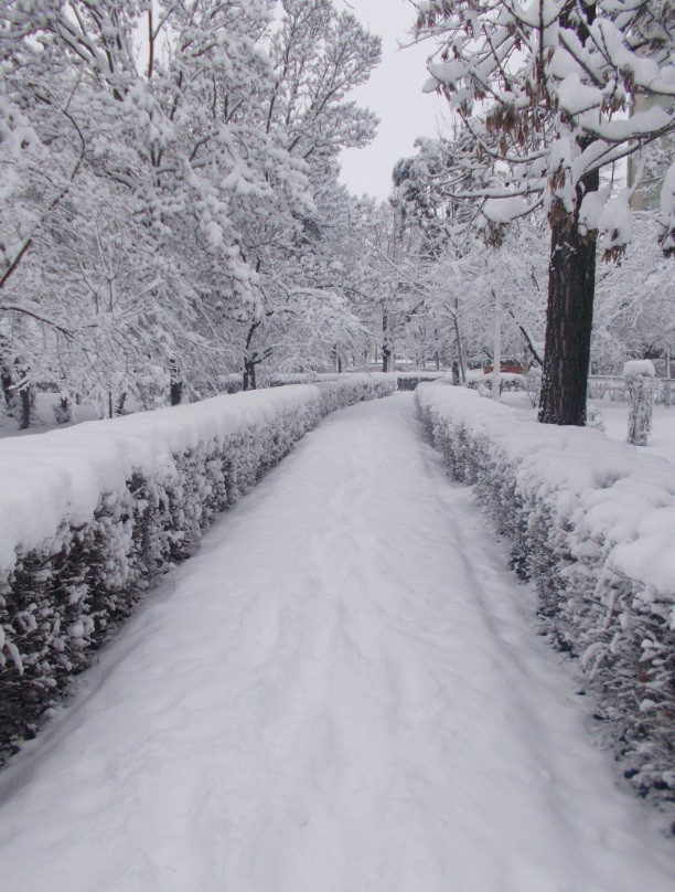 iarna in imagini frumoase 14
