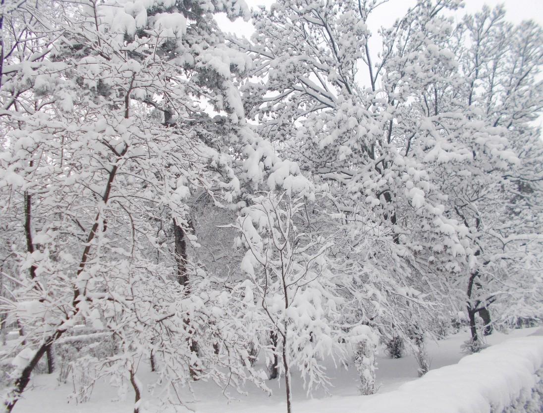 iarna in imagini frumoase 15