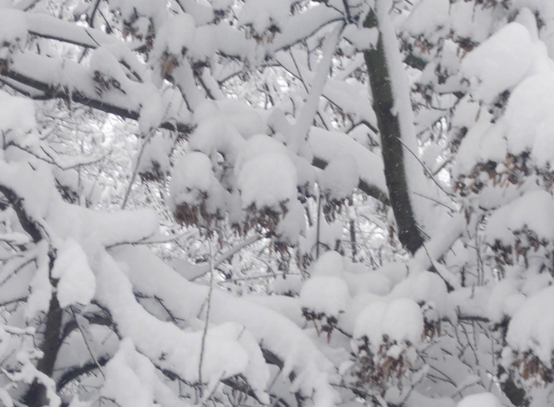 iarna in imagini frumoase 16