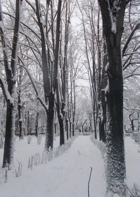 iarna in imagini frumoase 20