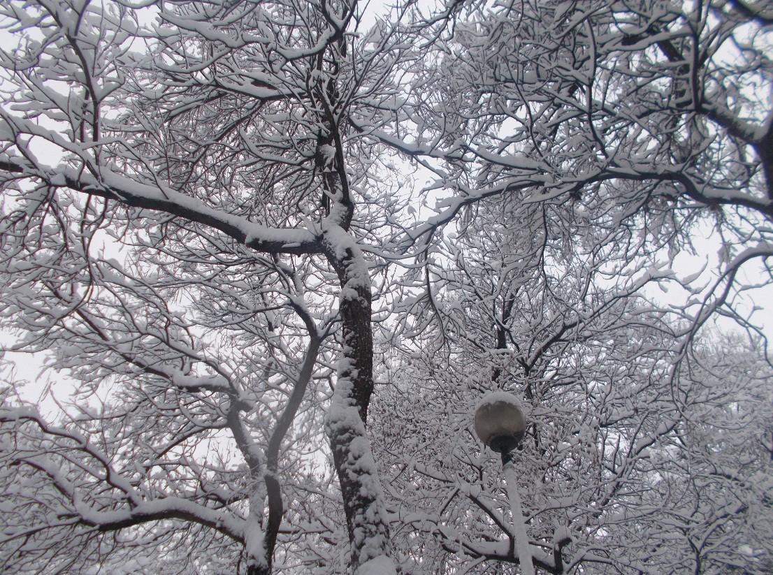 iarna in imagini frumoase 21
