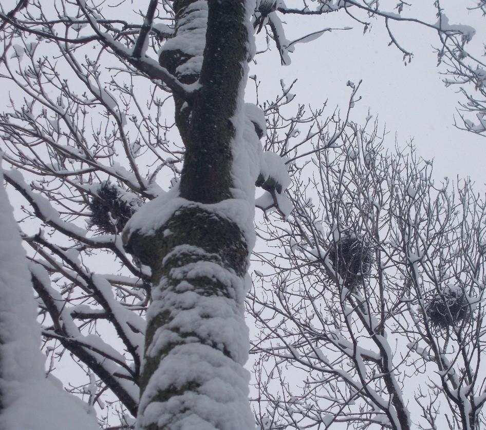 iarna in imagini frumoase 22