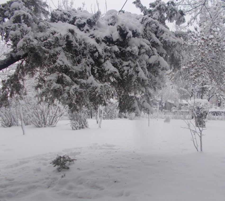 iarna in imagini frumoase 23