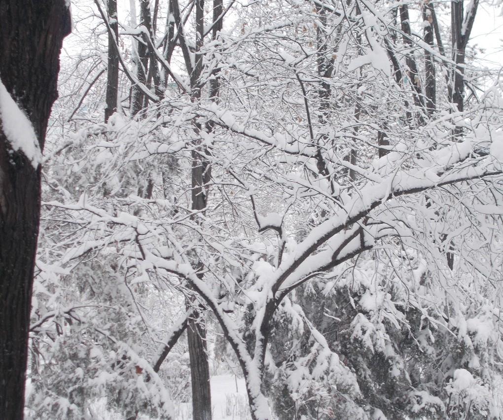 iarna in imagini frumoase 24
