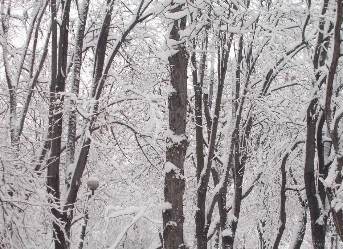 iarna in imagini frumoase 25