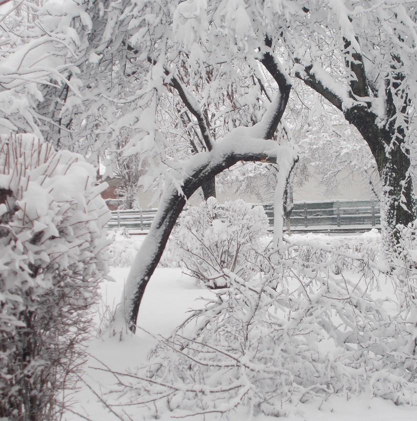 iarna in imagini frumoase 27