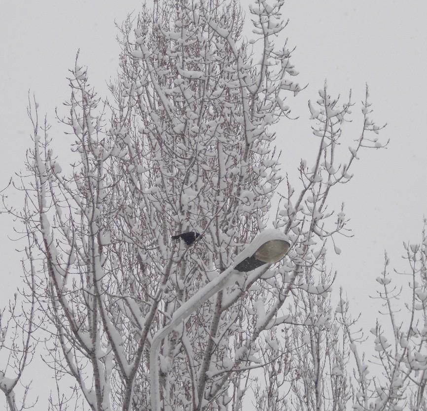 iarna in imagini frumoase 3