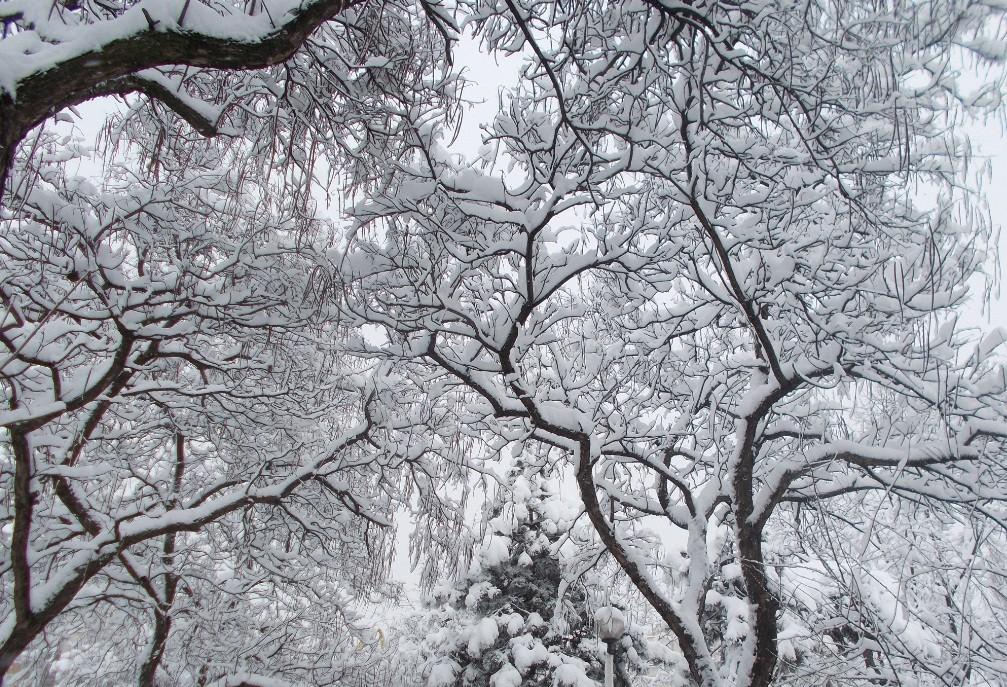 iarna in imagini frumoase 5