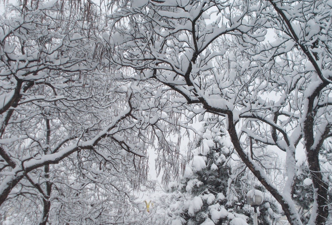 iarna in imagini frumoase 6