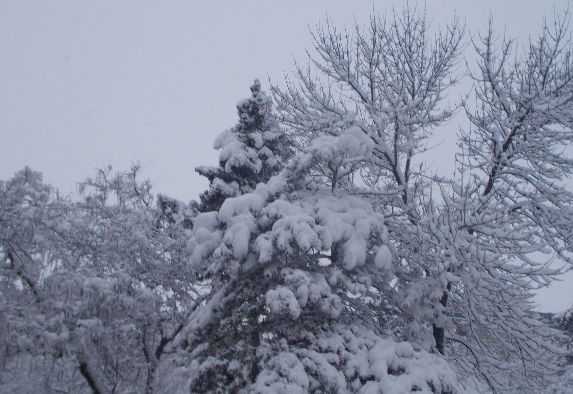 iarna in imagini frumoase 8