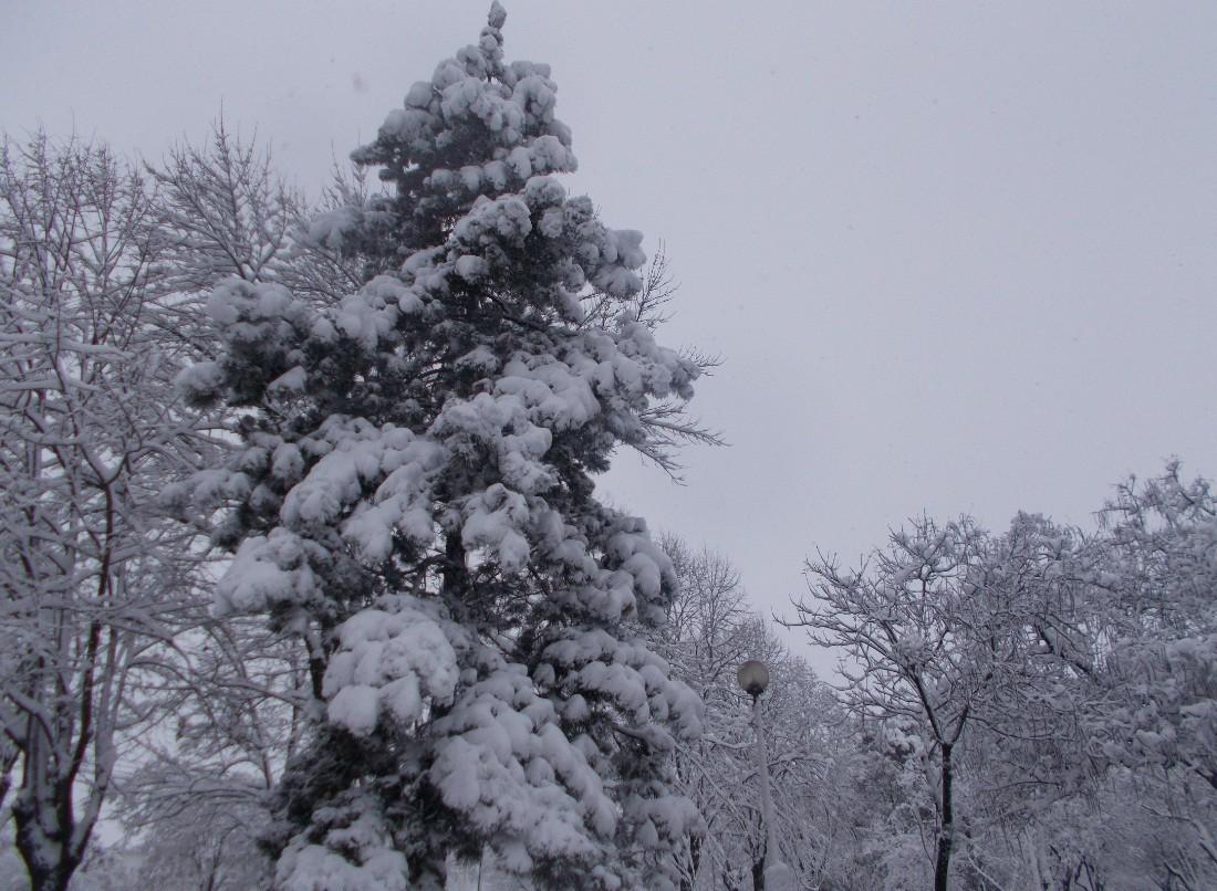 iarna in imagini frumoase 9