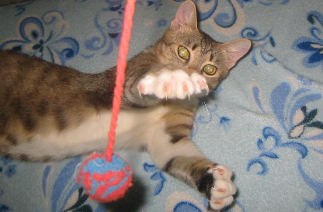 gheare de pisica 1