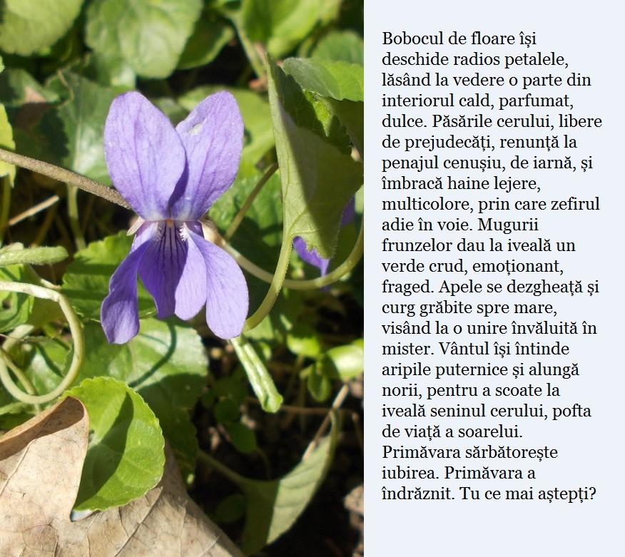 floare primavara