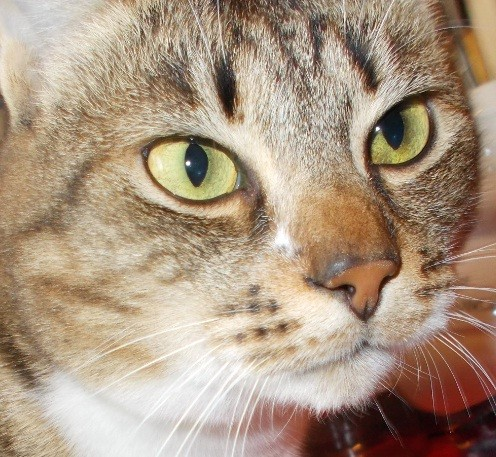 pisica frumoasa