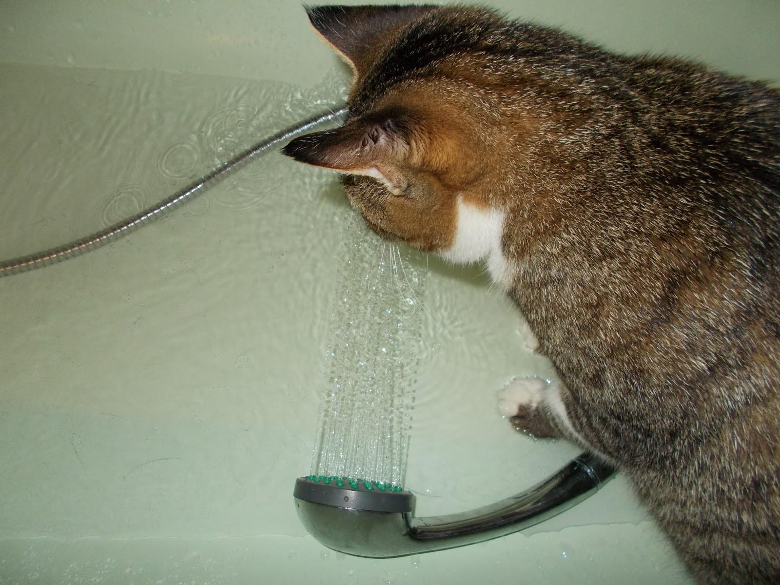 pisica la dus iubeste apa