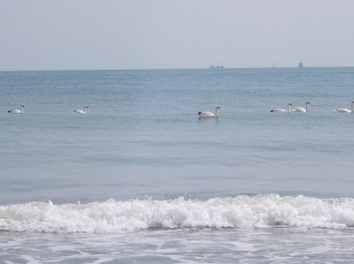 imagini mare litoral 15