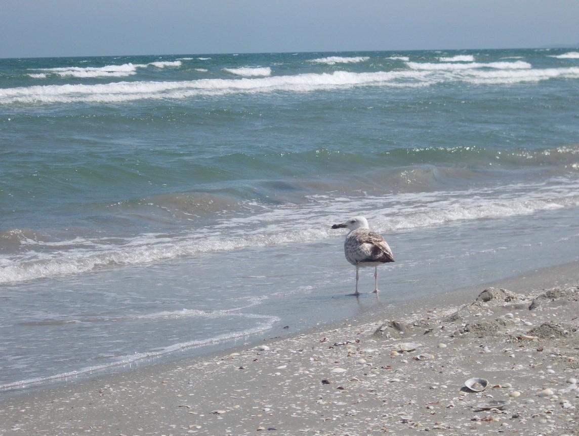 imagini mare litoral 3