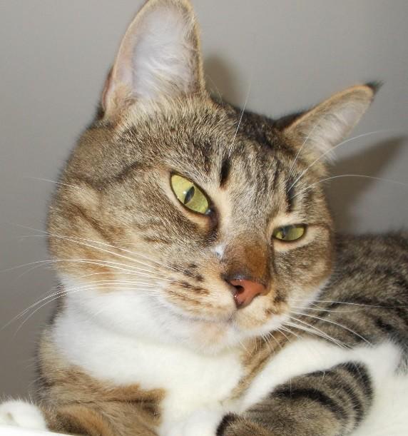 cea mai frumoasa pisica