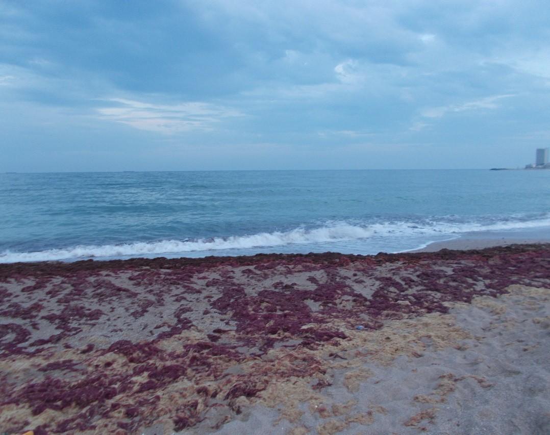 marea alge pe plaja