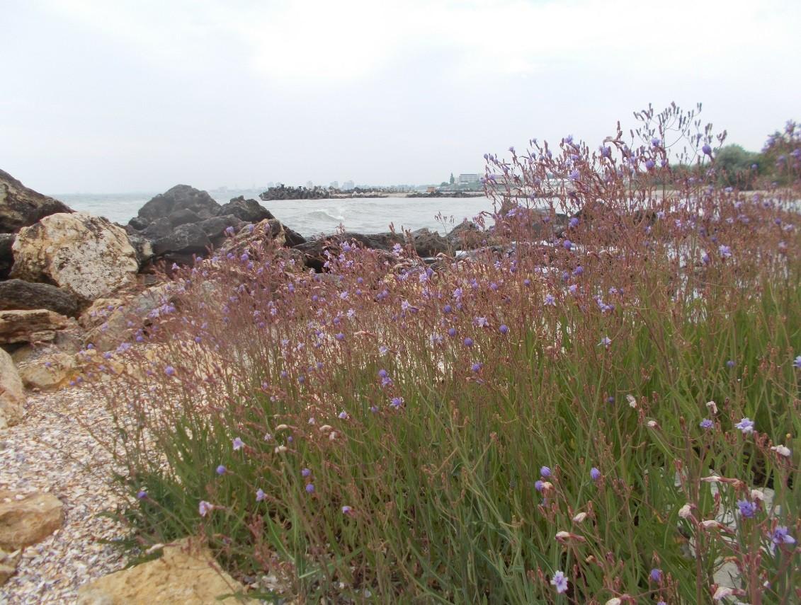 marea flori peisaj