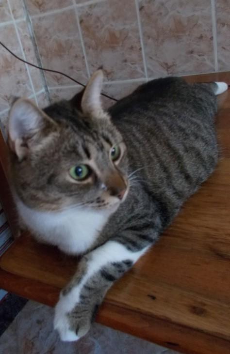 pisica sperioasa