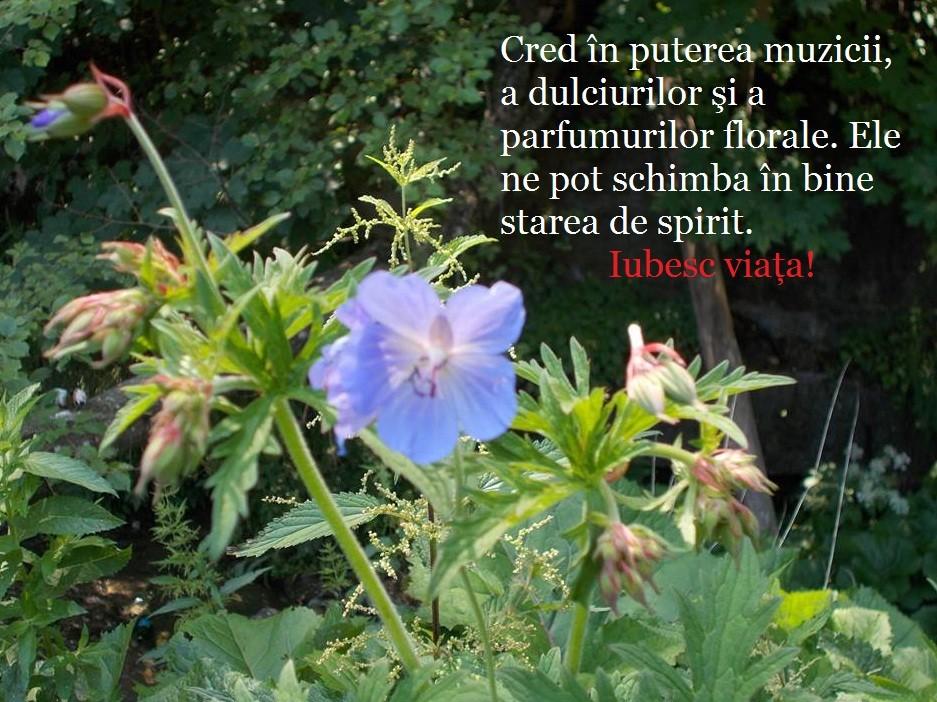 puterea florilor