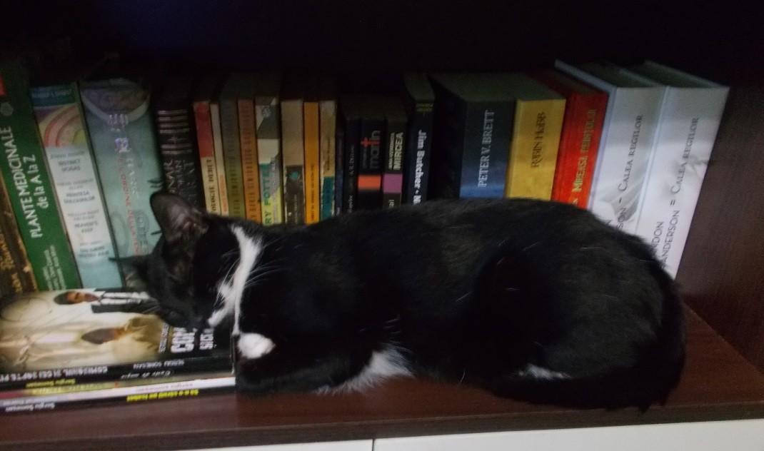 pisica pe carti