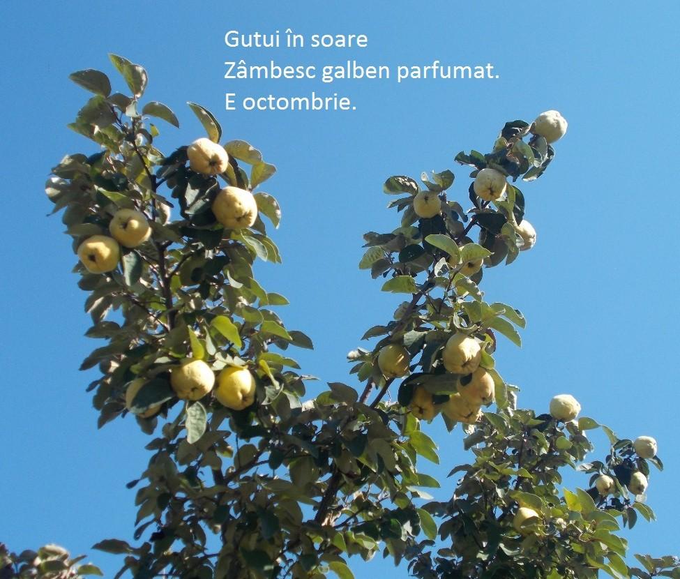 haiku-octombrie