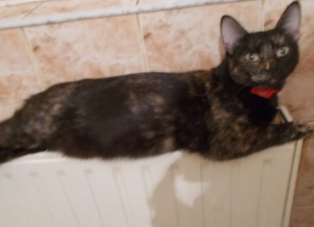 pisica-frumoasa