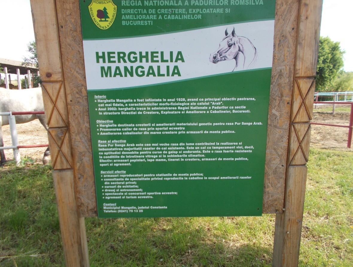 herghelia mangalia